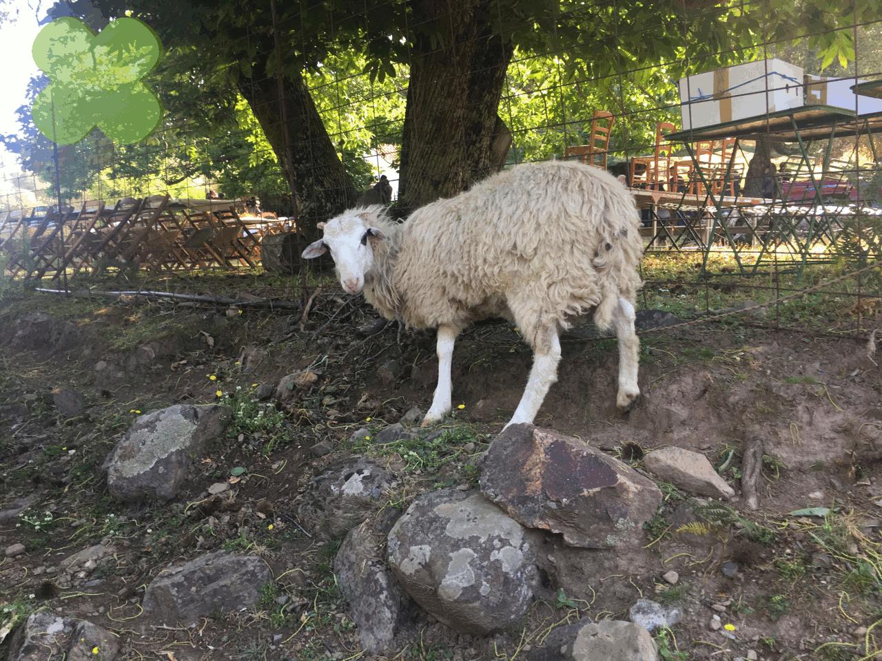 Panaygiri Agios Konstandinos IMG_088460Jun 22 2017