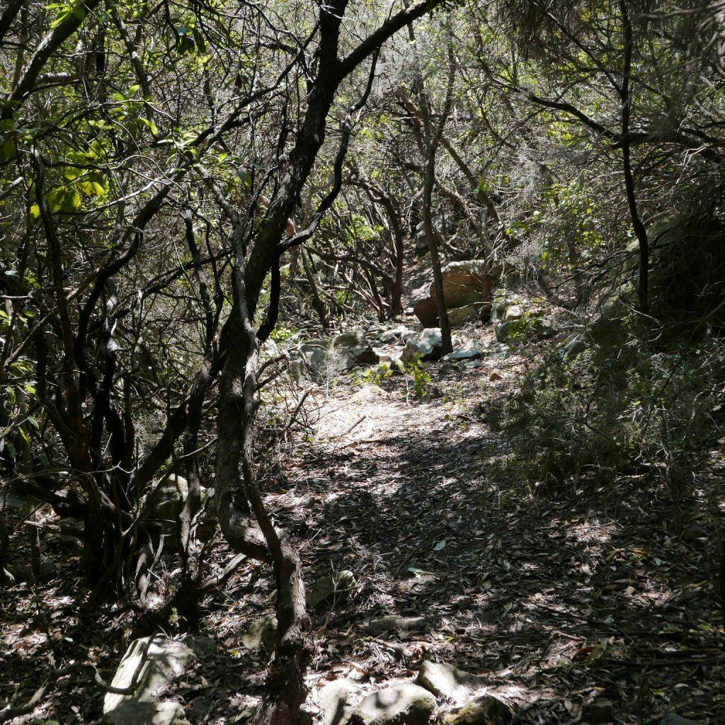 Vlatos Park of Peace Walking Path 4