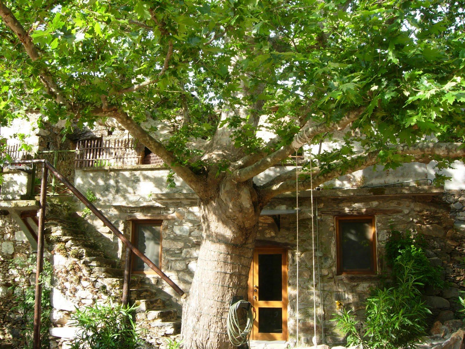 Villa Meli Zachari